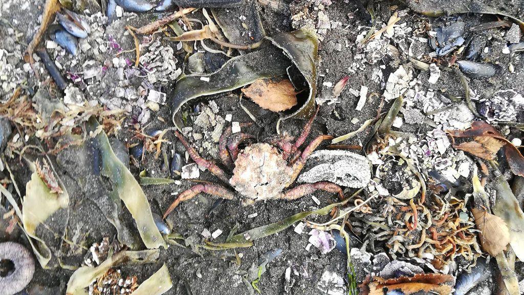 Decenas de animales muertos y surfistas con quemaduras químicas: nuevo desastre ecológico en Rusia
