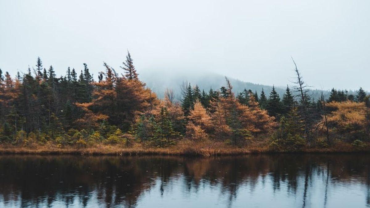 Los colores del otoño, vistos por satélite: así los capta la Nasa
