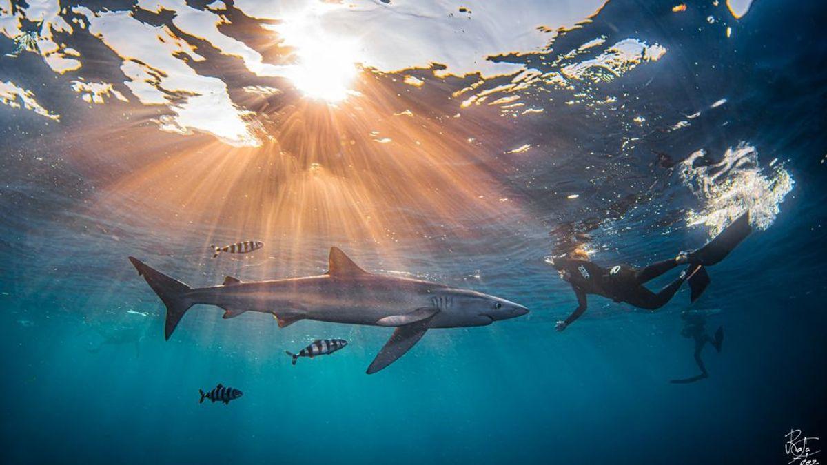Un encuentro en el Cantábrico con el tiburón más rápido del planeta