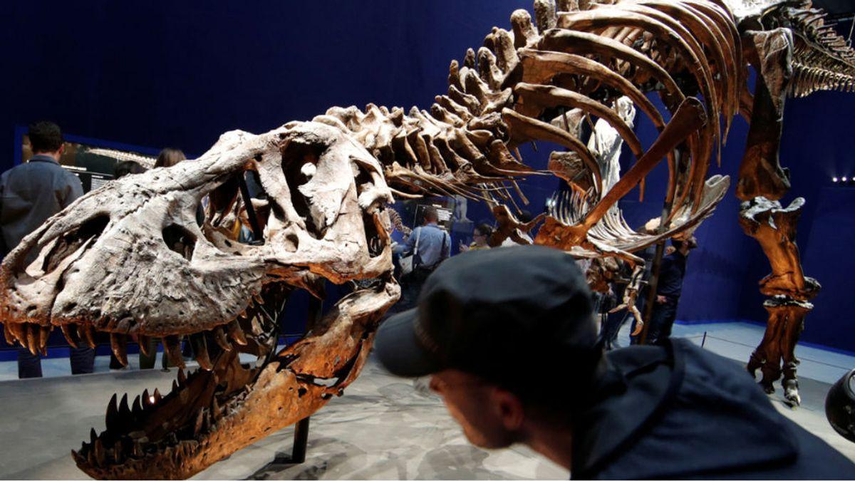 El 'T-Rex Stan' de Nueva York pulveriza récords y sale a subasta por 27 millones de euros