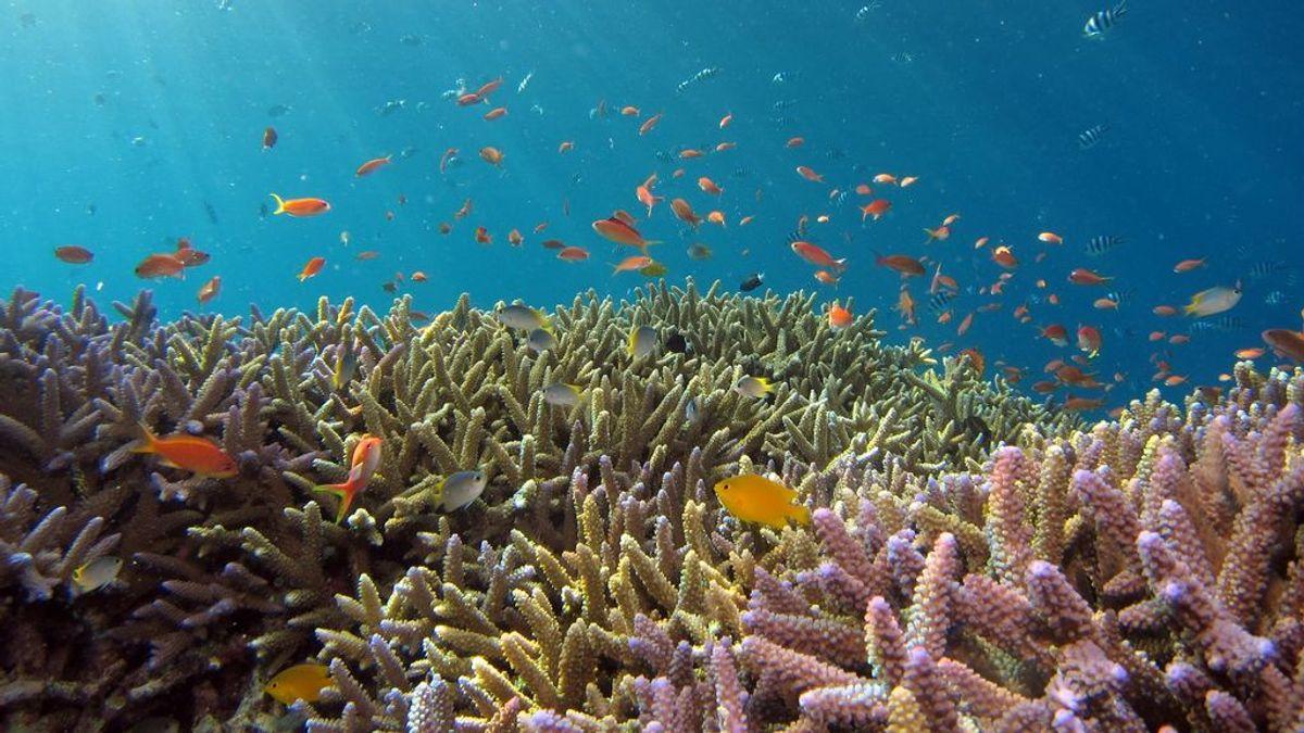 La biodiversidad de los océanos podría morir en 2050 según la ONU. ¿Sabes por qué son tan importantes los arrecifes de coral para el mundo marino?