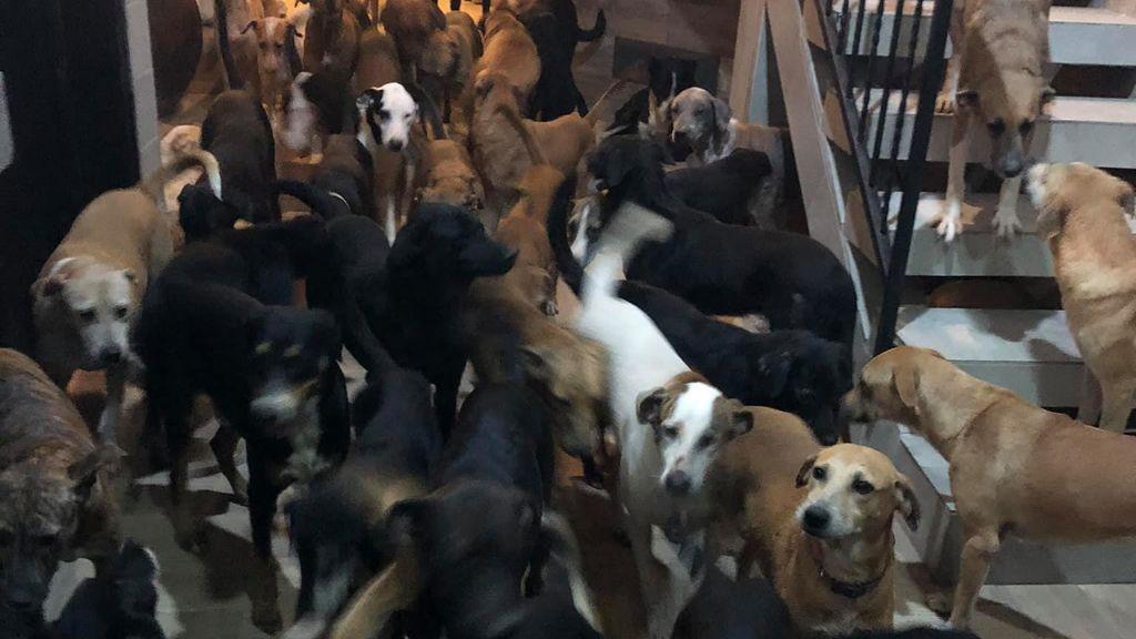 Un hombre se hace viral por resguardar a 300 mascotas durante el paso del huracán Delta