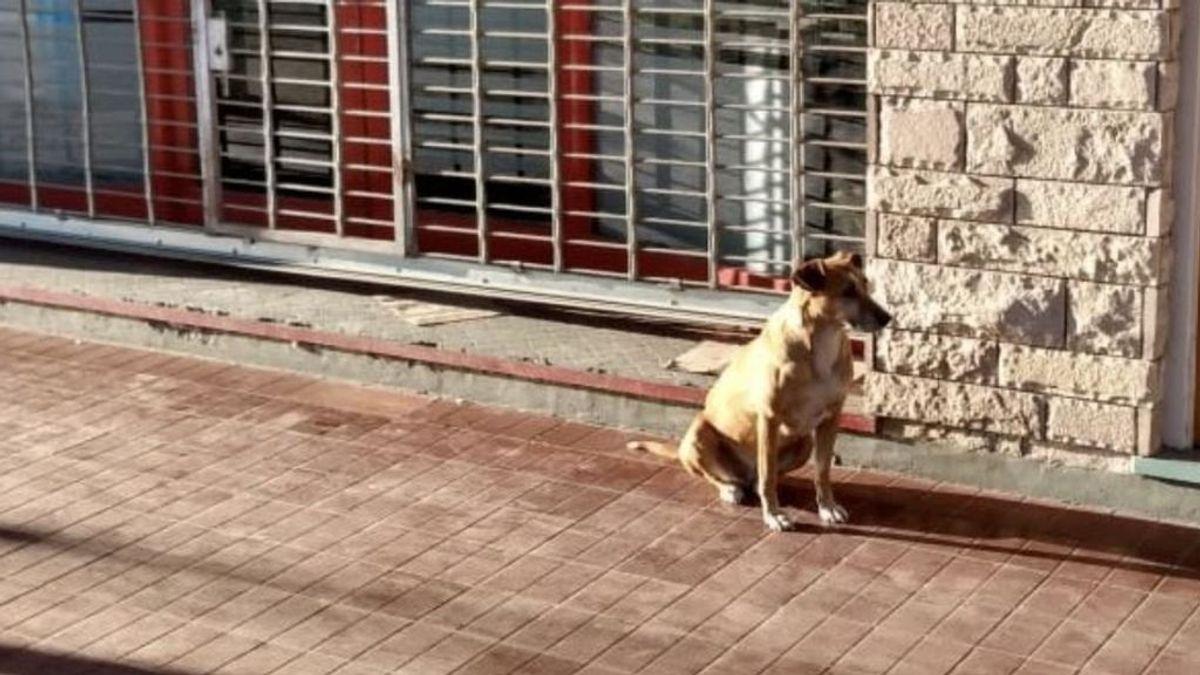 Una perrita espera todos los días a su dueña fallecida en la puerta de su librería