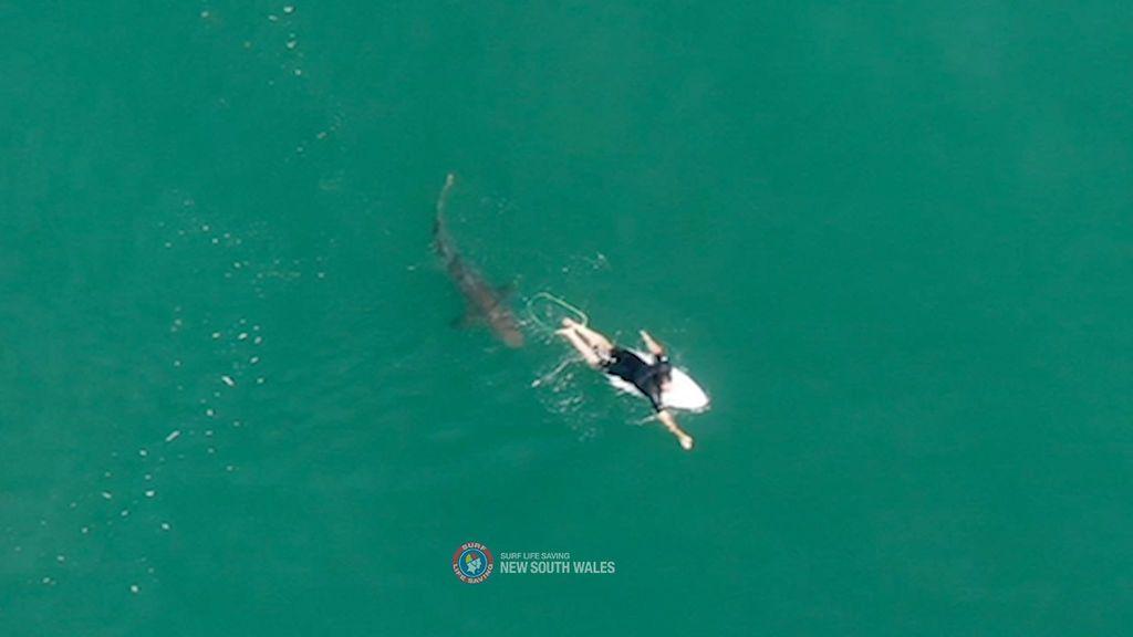 Un surfista se salva de milagro del ataque de un tiburón en Australia