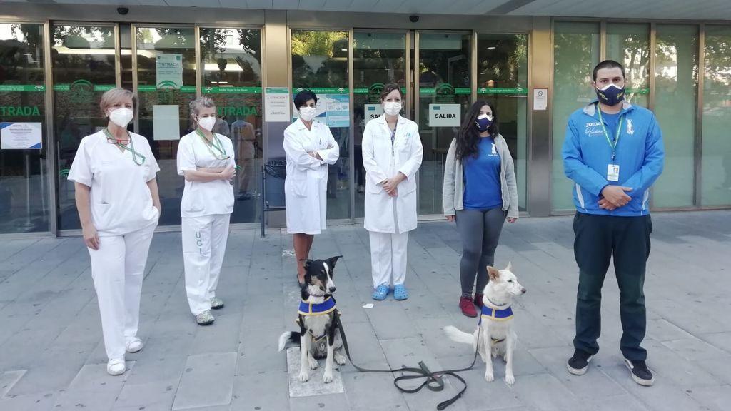 Perros contra el cáncer infantil: regresa la terapia canina al Hospital Virgen de las Nieves de Granada