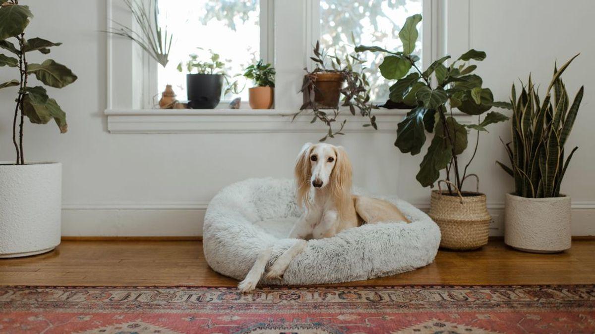 En la paciencia está la clave: por qué y cómo debes secar el pelo a tu perro este invierno