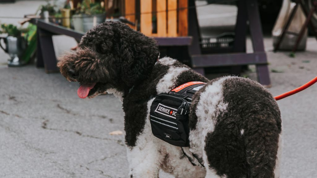 Aburrimiento, jueguecitos o bocas grandes: por qué los perros muerden sus correas