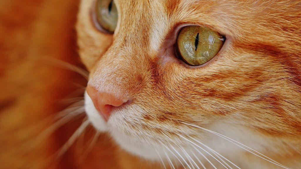 El sufrimiento de Nana tras perder a su dueño: la gata lleva dos años yendo a su tumba