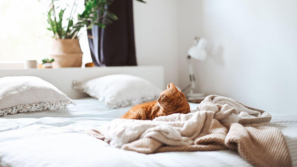 """""""Fuera de mi cama"""": conseguir que el gato deje de dormir contigo no es complicado"""