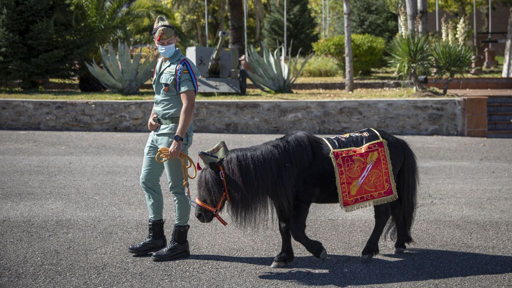 EuropaPress_3368298_soldado_pasea_poni_legion_campamento_ronda_malaga_andalucia_espana_octubre