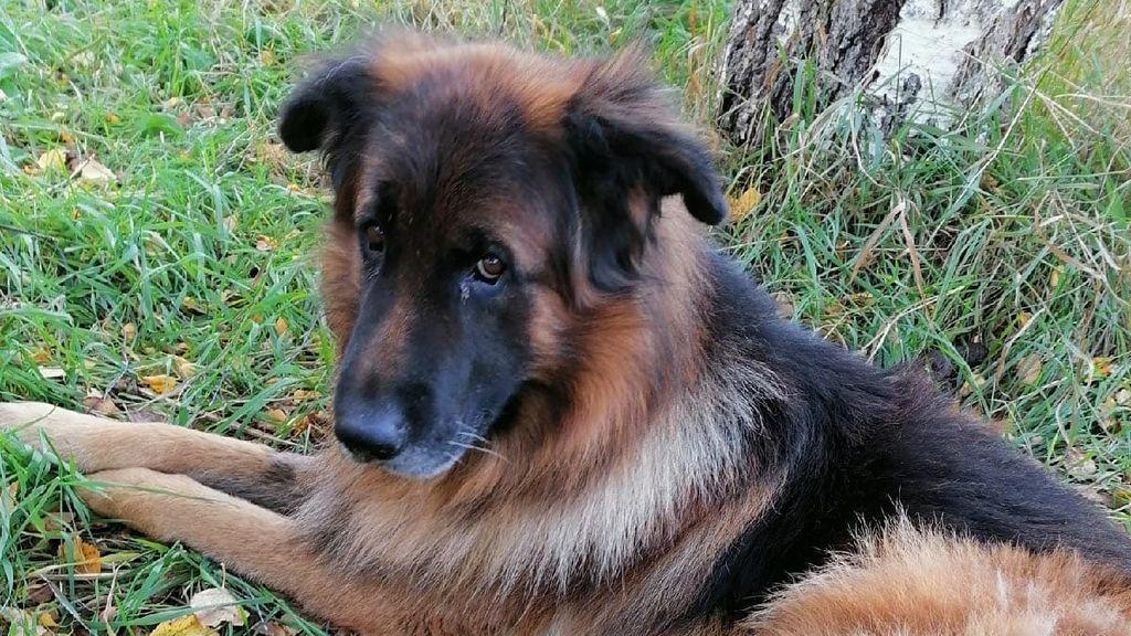 """Un perro sale de la tumba tras ser enterrado por sus dueños """"por error"""""""