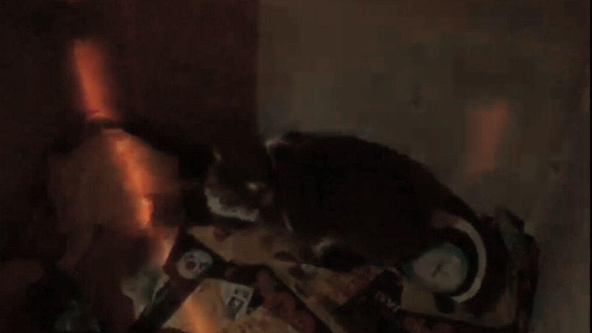 Rescatan a un gato que llevaba tres días atrapado en un contenedor de ropa de Alicante