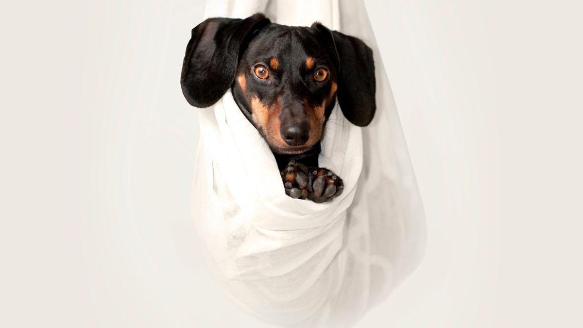 Las mascotas son amigos, no obsequios: por qué nunca es una buena idea regalarle uno a tu mejor amiga