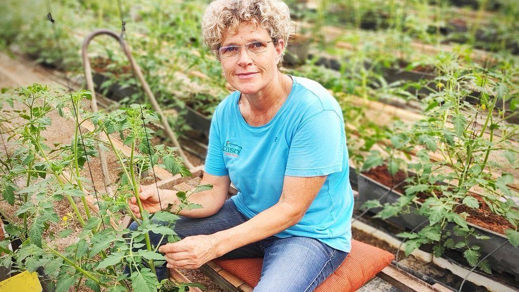 Más de 14.000 familias se dedican al cultivo de frutas y hortalizas de invernadero en un sistema que garantiza la sostenibilidad social