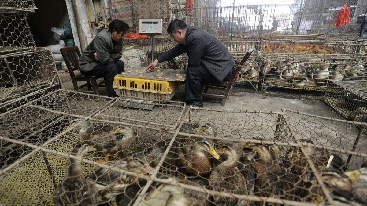 China prohíbe la cría de de 64 espacies de animales salvajes destinados al consumo humano