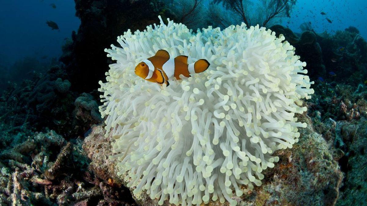 Más de la mitad de la Gran Barrera de Coral de Australia ha muerto desde 1995