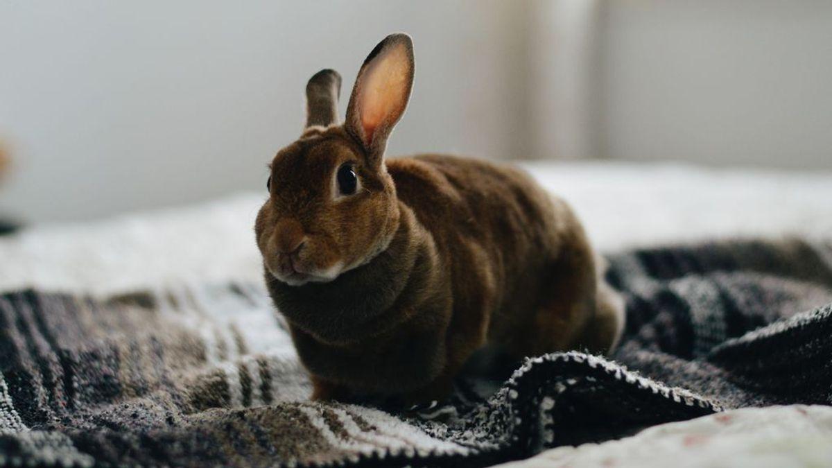 Panza llena, conejo feliz: cómo alimentar a estos animales para que crezcan sanos y fuertes