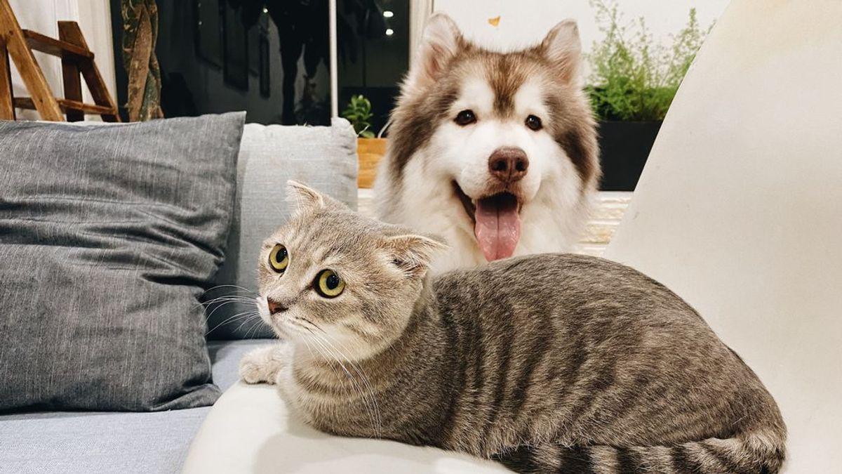 Perros, gatos y sus miedos en común: fobias que pueden aparecer en tus mascotas