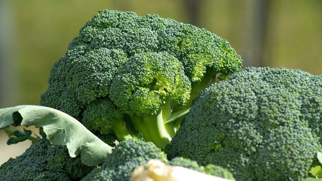 Beneficios de incluir el brócoli en tu dieta: comprueban su eficacia contra la artritis