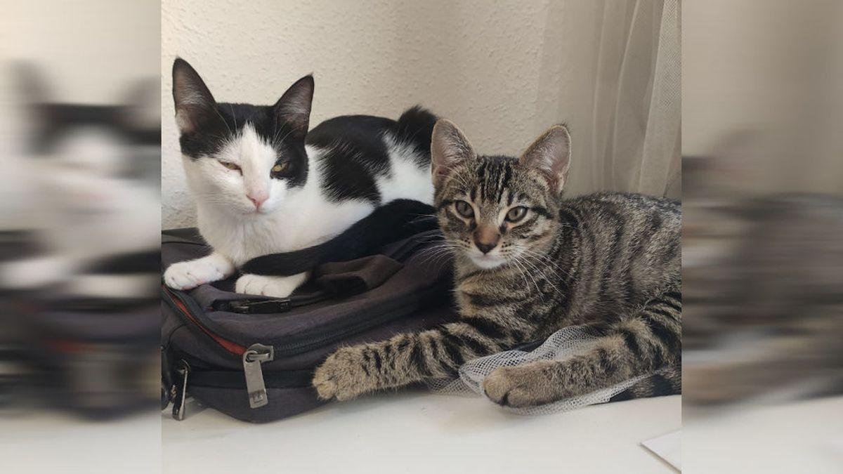 """""""Mi gato se llama Covid"""", la inesperada moda durante la pandemia"""