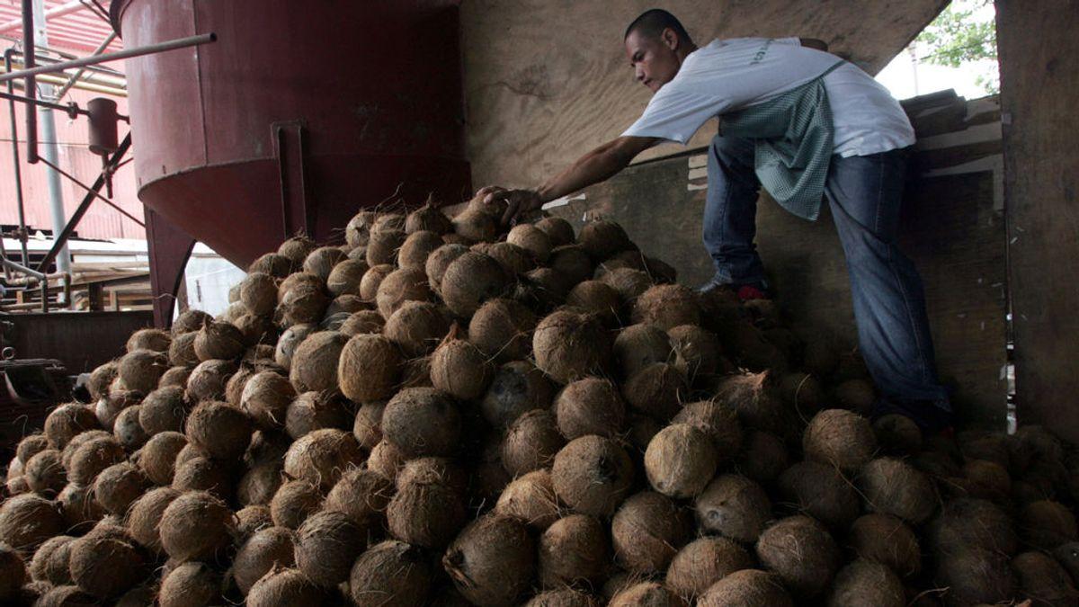 Filipinas, el mayor productor de aceite de coco del mundo, dice que este aniquila el coronavirus