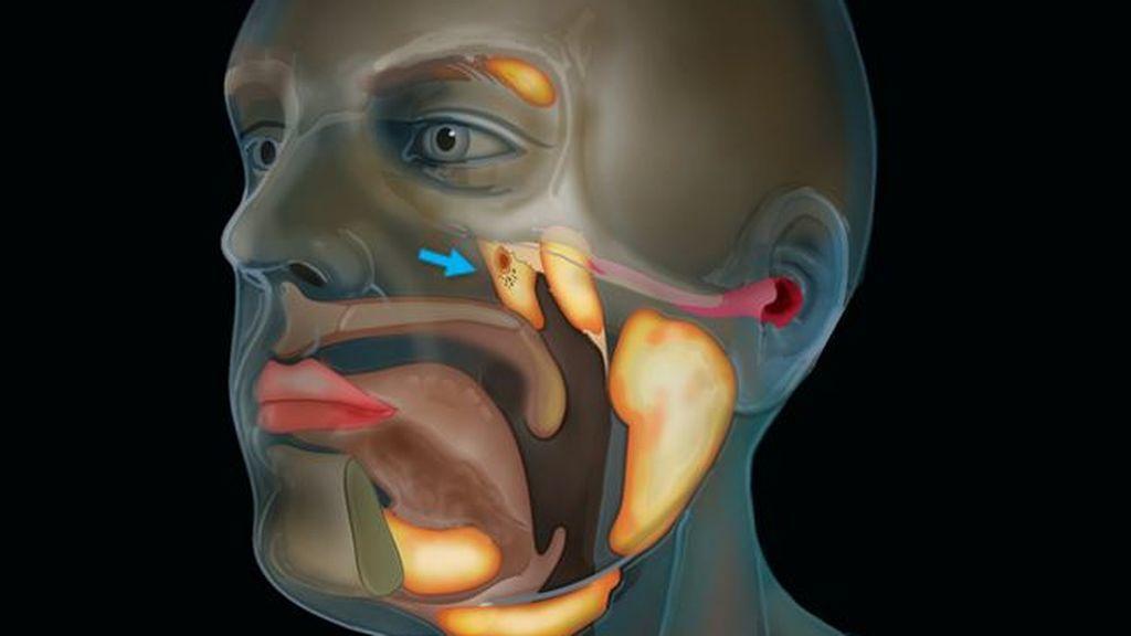 Científicos descubren un nuevo órgano en el centro de la cabeza humana