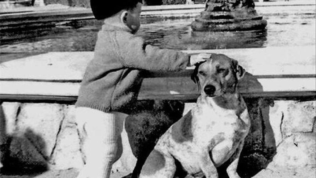 La historia de Tarzán: el 'perro Hachiko' de Alicante que se ganó el cariño de todo un pueblo