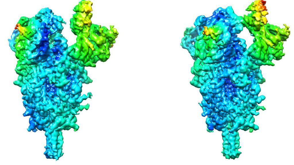Proteína Spike del coronavirus SARS-CoV-2