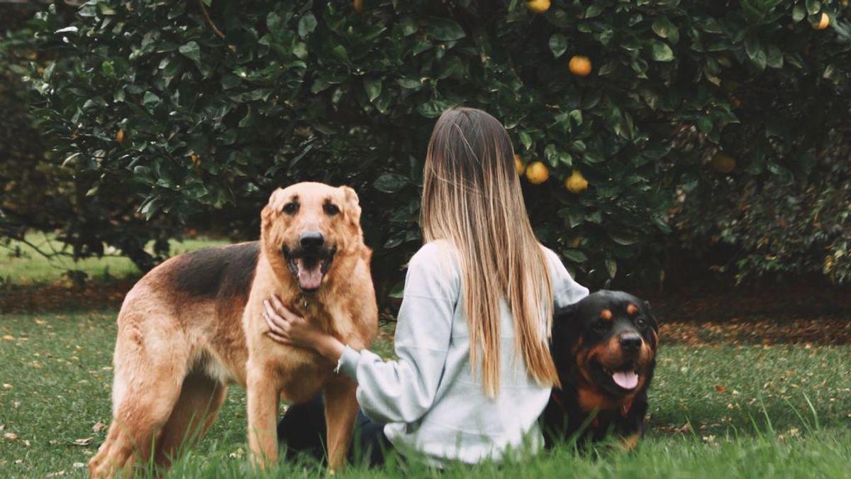 Dietas caninas llenas de beneficios: qué frutas que pueden comer los perros y cómo hay que dárselas
