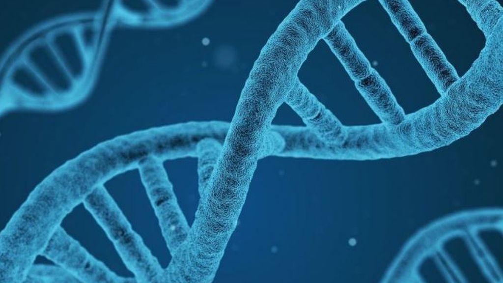 Descubren nuevos genes relacionados con el autismo y otros trastornos neurológicos