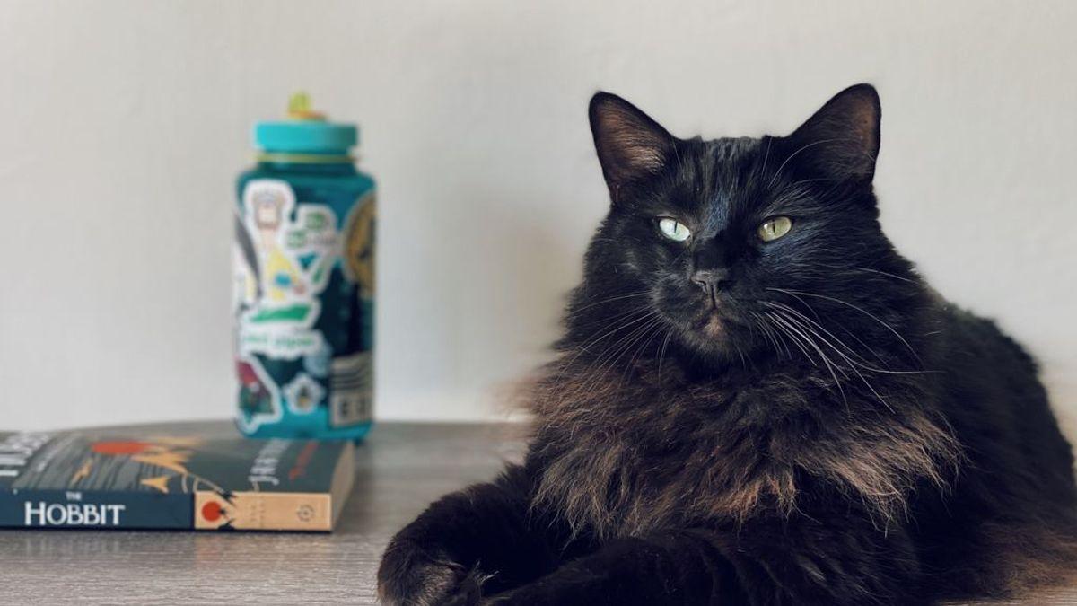 Una mirada basta: la forma más sencilla de ganarse la simpatía de un gato está en los ojos