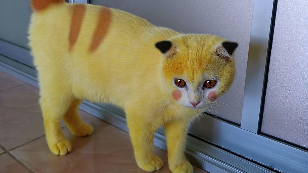 El gato Pikachu