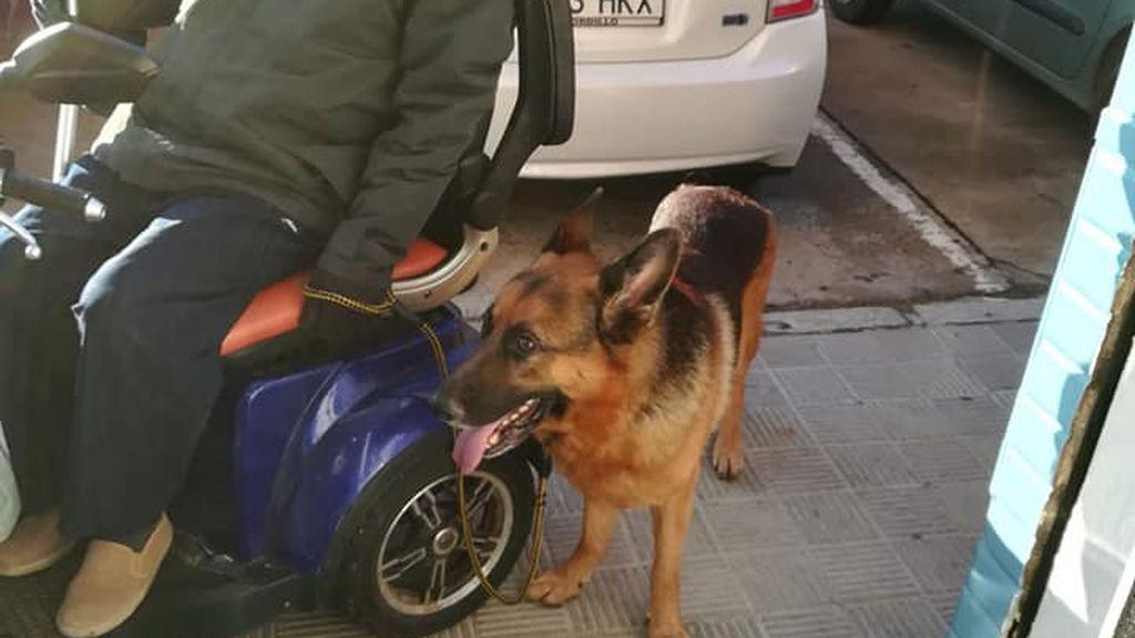 """Pepe, el enfermo de ELA que busca una familia para su perro Danko: """"Es muy bueno"""""""