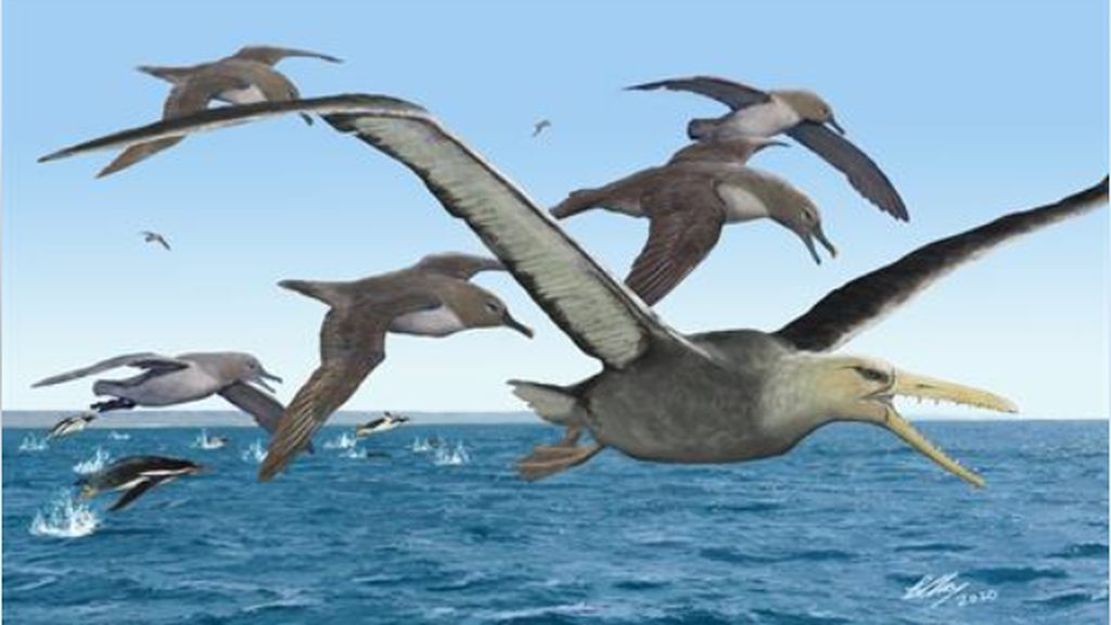 Las aves se volvieron gigantescas tras las desaparición de los dinosaurios