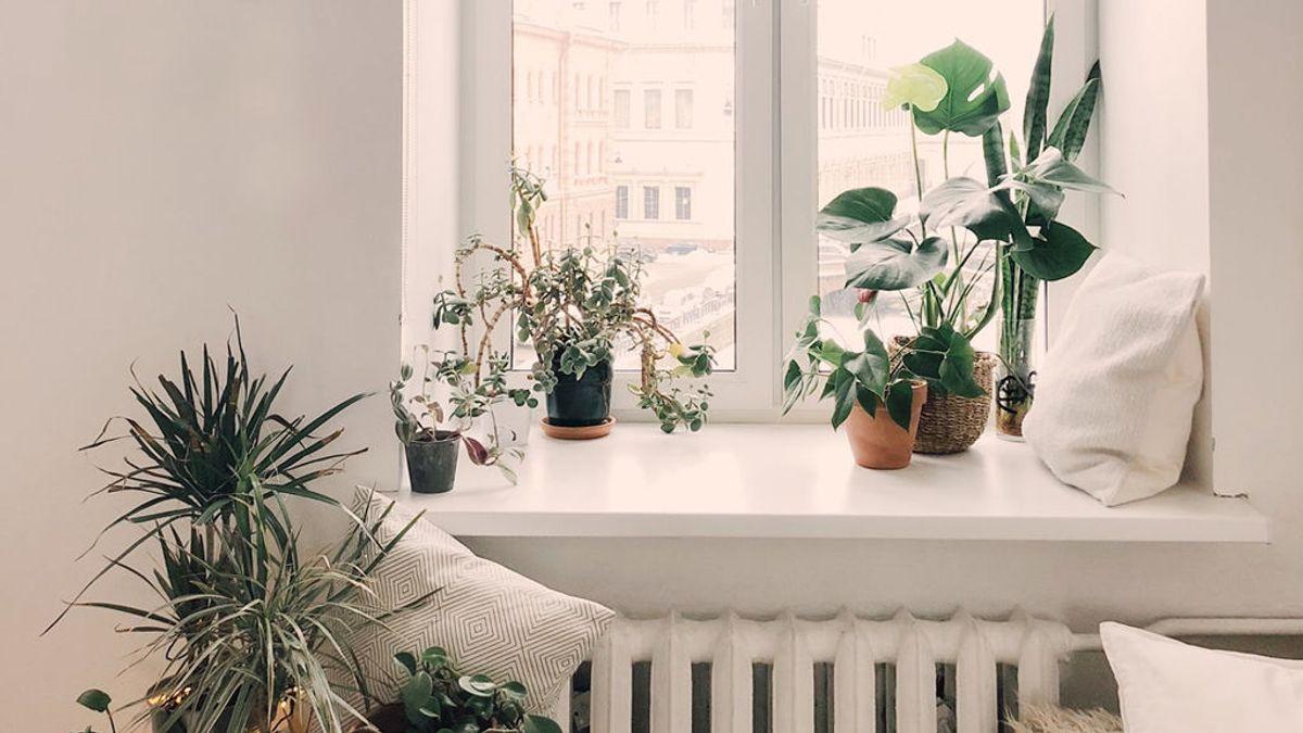 Escudo verde: plantas de interior para purificar el aire en pandemia y consejos de experta para saber elegir