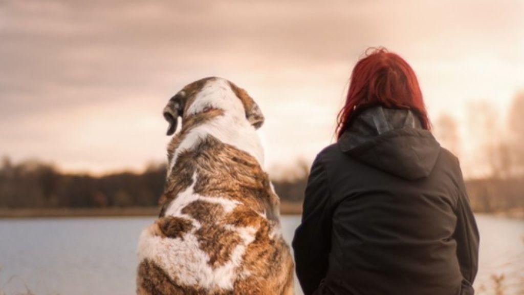 El misterio de la relación entre perros y humanos: pudimos domesticarlos en la Edad del Hielo