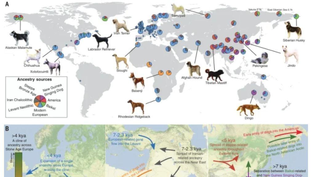 La relacion entre perros y humanos se remonta a la edad de hielo
