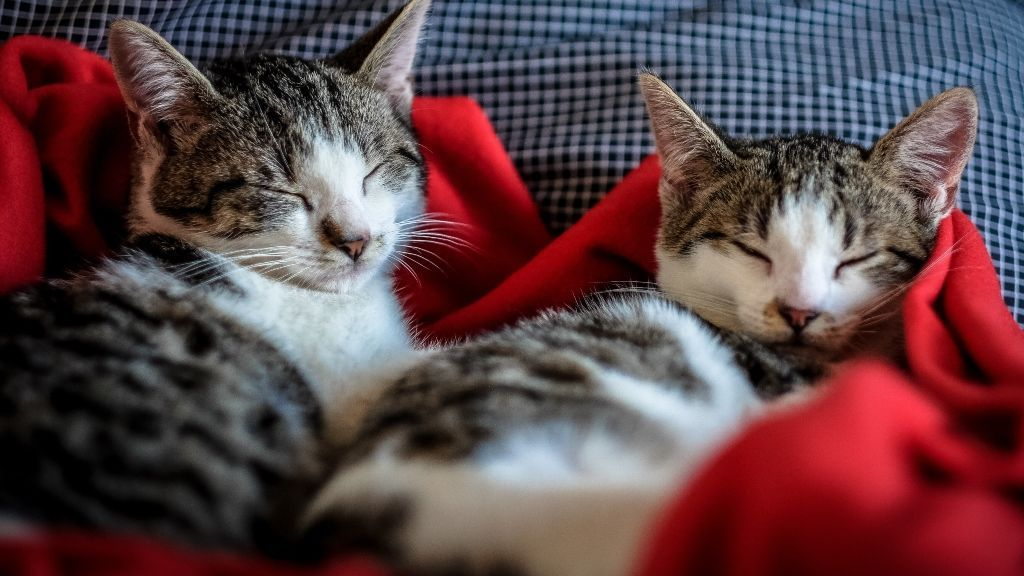 Un refugio de Barcelona acoge a los gatos que han perdido a sus dueños por el coronavirus