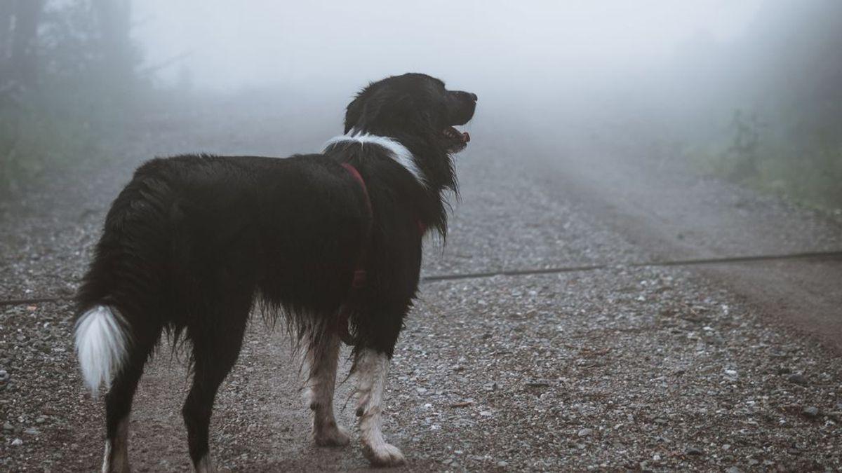 O les encanta o la odian: cuatro perros nos dan ideas para disfrutar de los días de lluvia