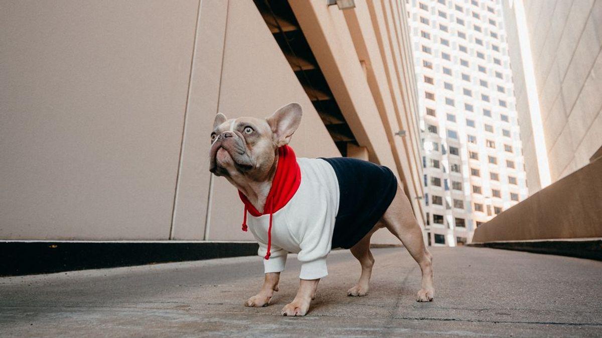 Influencers de cuatro patas: mascotas instagrammers a las que merece la pena seguir