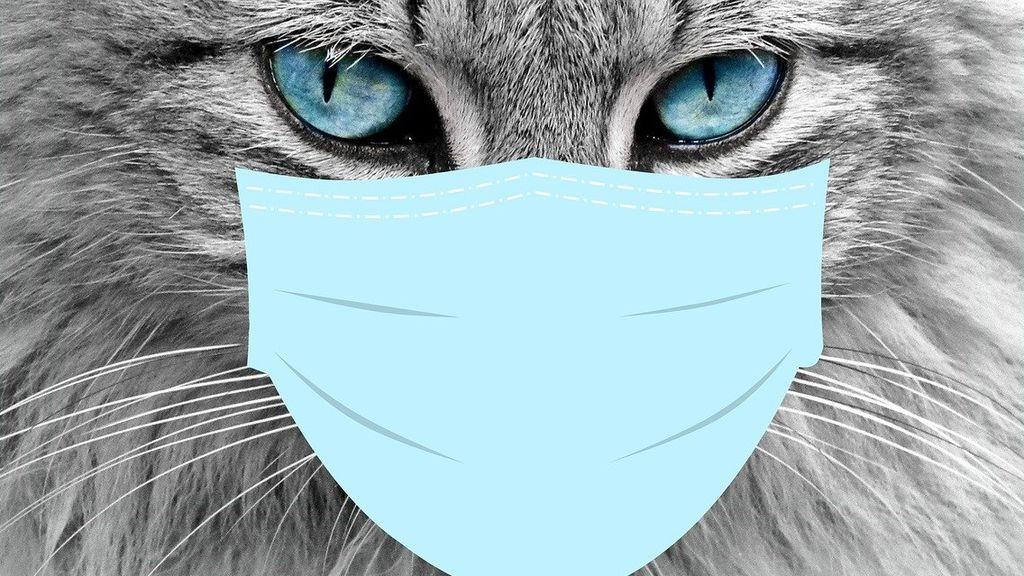 ¿¿Cómo evitar que nuestras mascotas se contagien? Los animales también deben mantener la distancia social