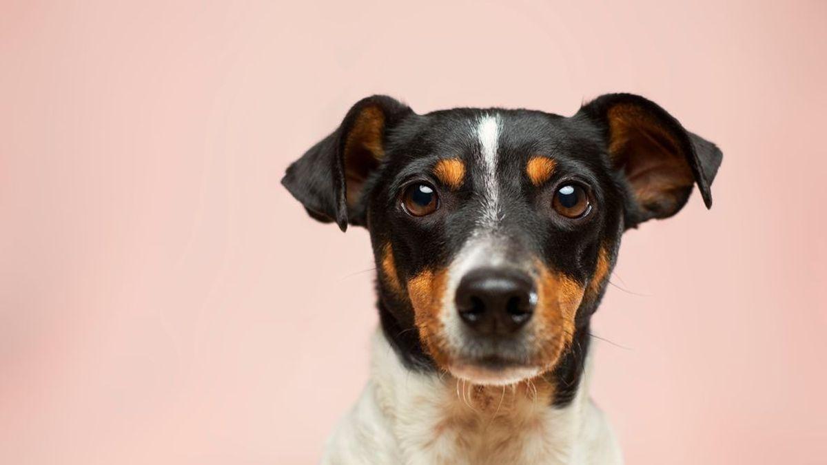 Nombres humanos para perros: estos son los más habituales en España