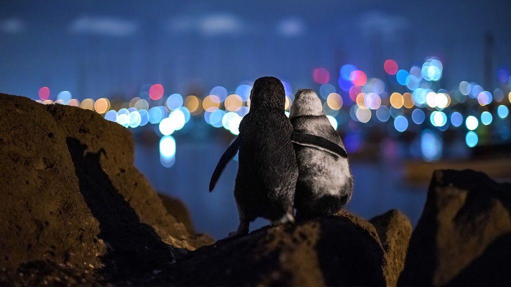 Se viraliza la fotografía de dos pingüinos supuestamente consolándose mirando al horizonte