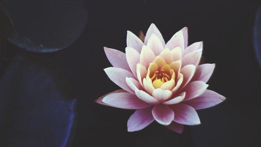 Elegantes y representativos: ¿qué significan los tatuajes de flor de loto?