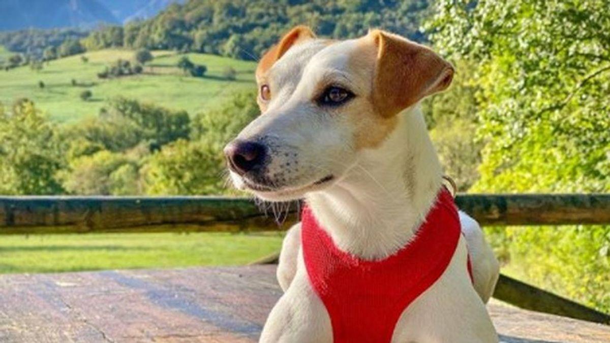 Pipper, el perro influencer que ha protagonizado dos cómics para visibilizar que viajar con animales es posible