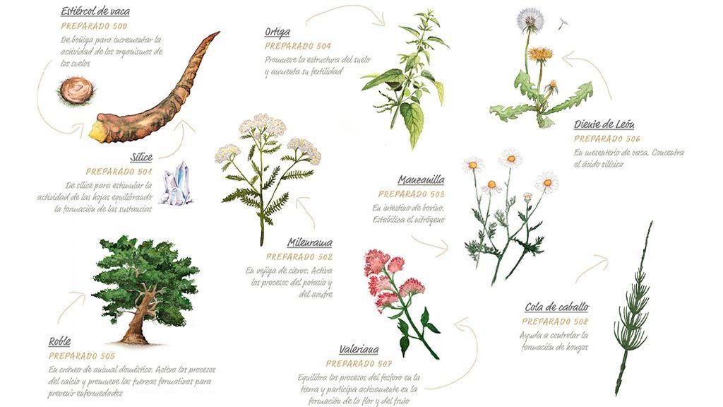 Los ocho preparados biodinámicos