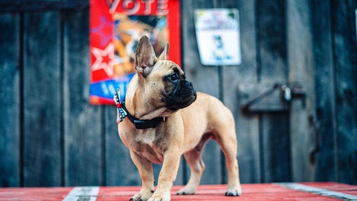 Wilbur, el alcalde canino de Rabbit Hash