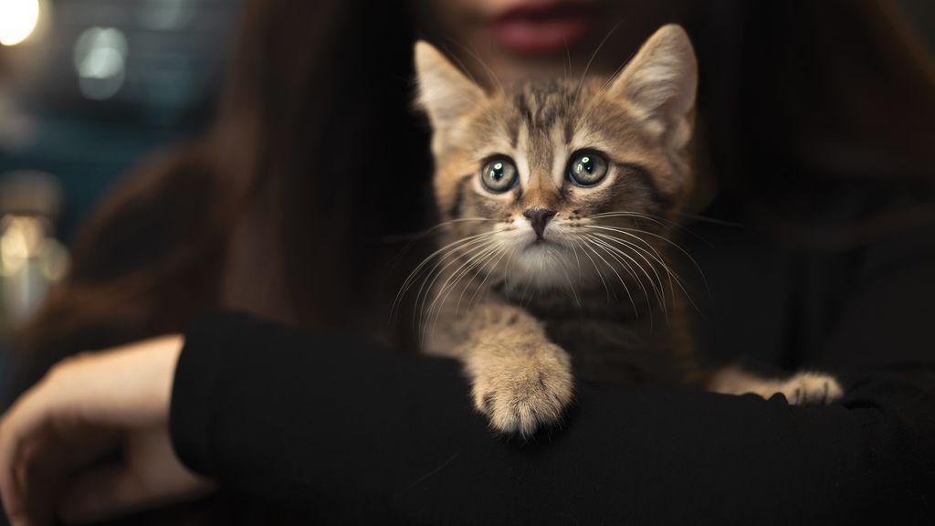 Recomendaciones de una psicóloga para gestionar la ansiedad cuando tu mascota está enferma