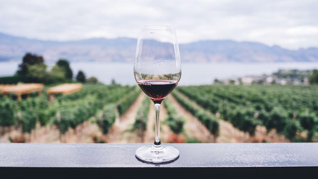 Un vino cosechado en las alturas con el que los viticultores se juegan la vida. Así es la viticultura heroica