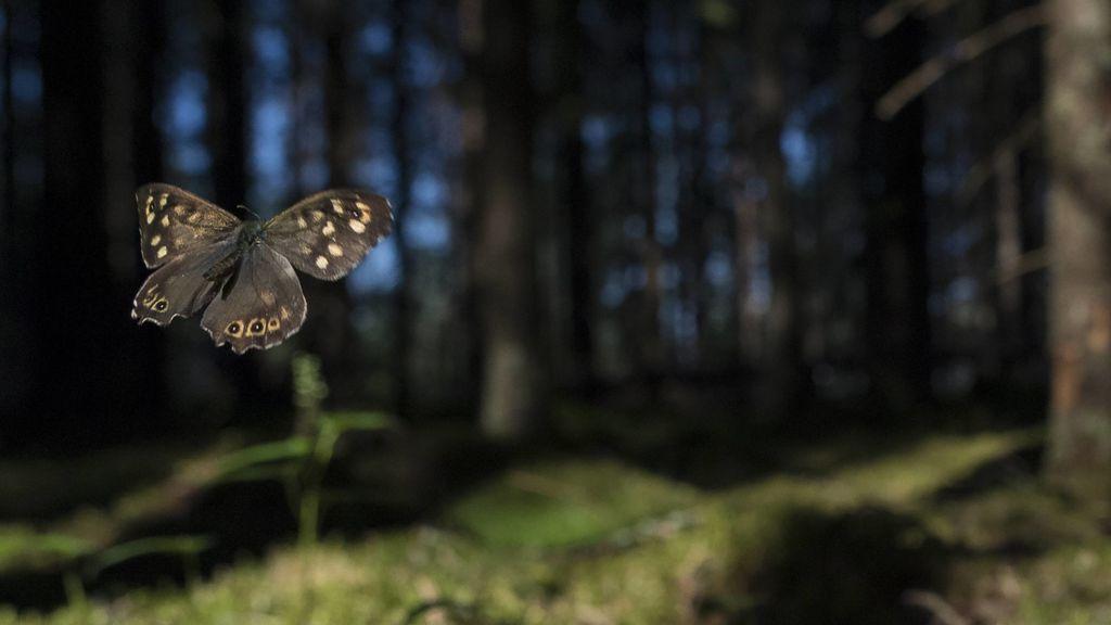 El regreso de las mariposas: cómo ha conseguido Barcelona revertir su pérdida
